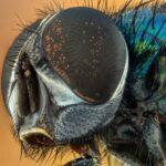 lupas-para-ver-insectos